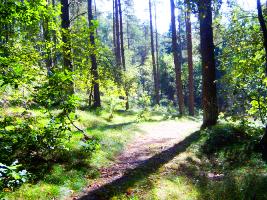 Ruterne går gennem skove og åbent landskab