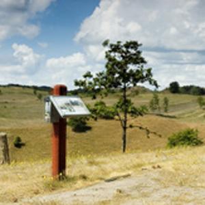 Hvorfor fælder man så mange træer i nationalpark mols bjerge