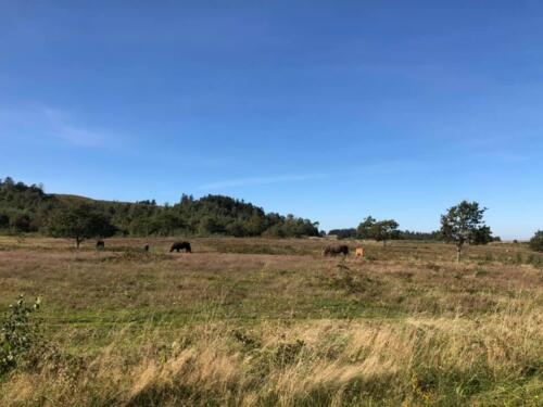 Foto Jørgen Kudsk - hestene i Mols Bjerge