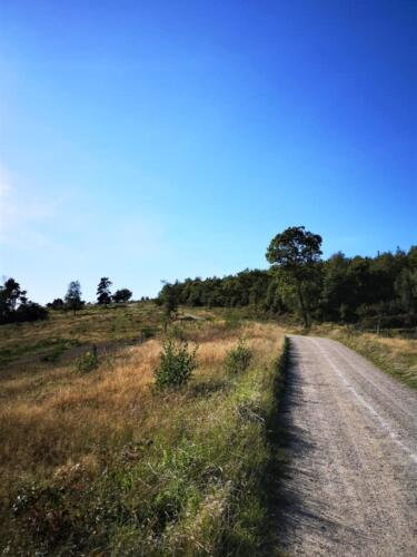 Foto Sabrina Lock - grusvej i Mols Bjerge (1)