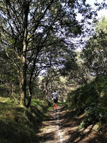 Foto Sabrina Lock - smuk rute i skoven